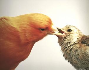 Comida para canarios y todo tipo de pájaros. Nutra comida para pájaros es de primera calidad, envasada en atmosfera controlada para garantizar la maxima frescura de las semillas. así tu pájaro estara siempre bien nutrido y alimentado