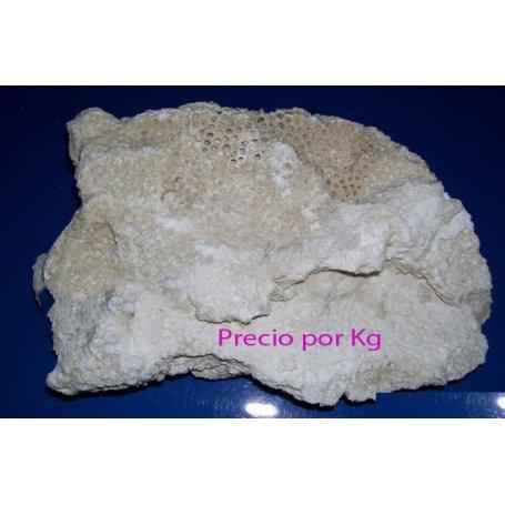 Roca Arrecife De Coral Base (1Kg)