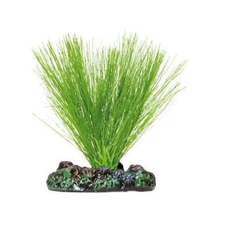 Planta Seda Miriophyllum 7 Cm