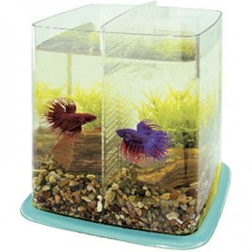 Betta Battle Paradise 6,4 Litros Amarillo