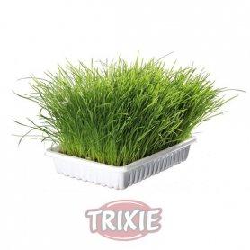 Bandeja Cultivo Hierba Para Gatos 100Gr