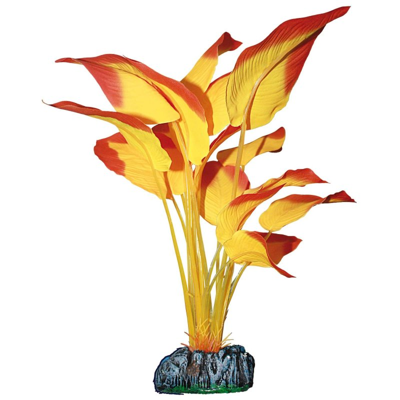 Planta Anubia Naranja 11Cm