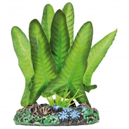 Planta Seda Syngonium 20 Cm