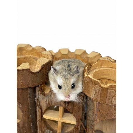 Hamster Roborowski