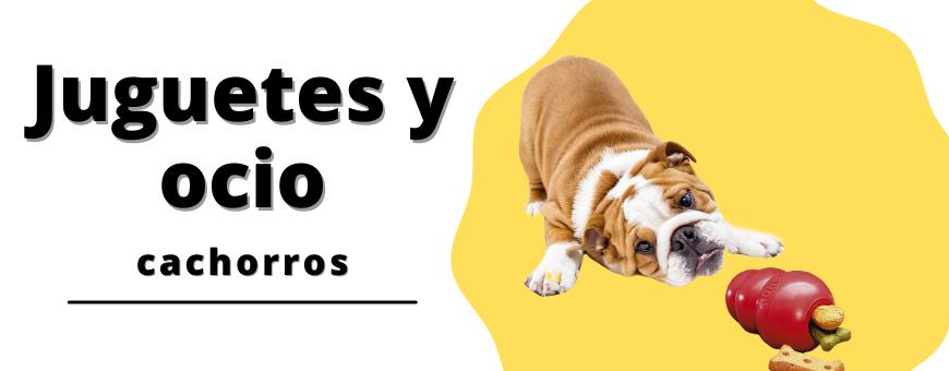 Accesorios para jugar con tu perro