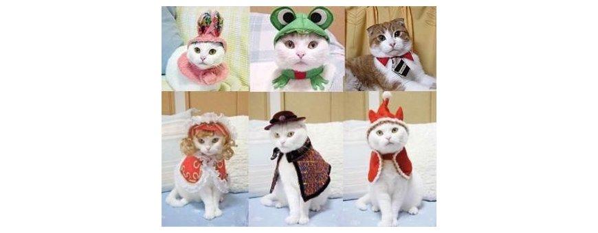 Complementos gatunos
