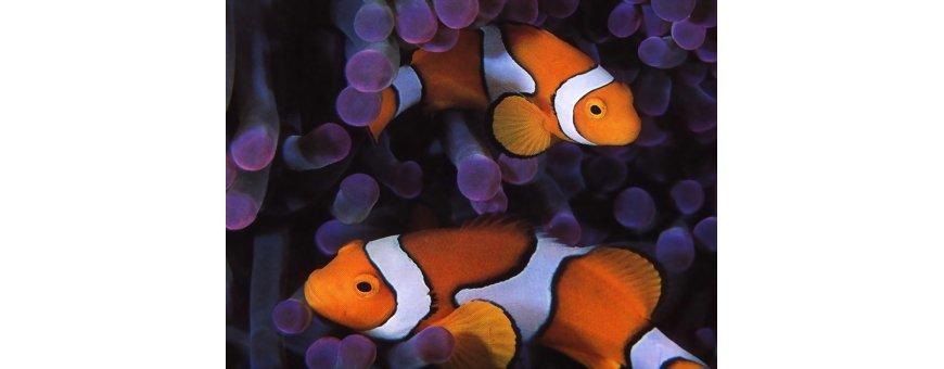 Comida peces tropicales
