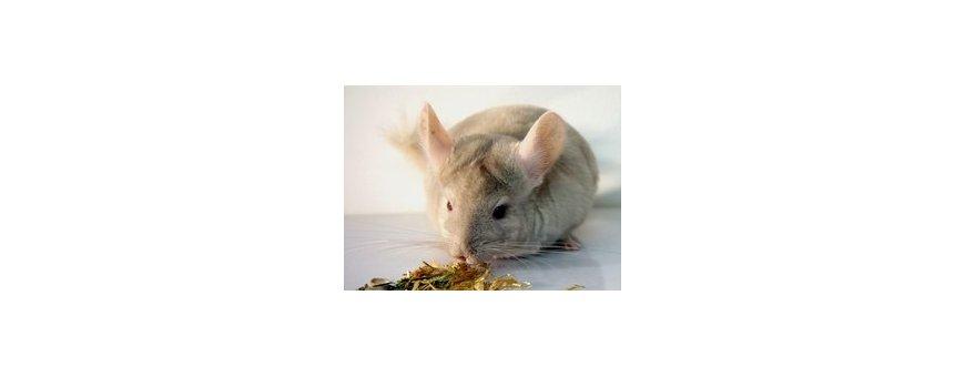 Alimentación para roedores y pequeños mamíferos.