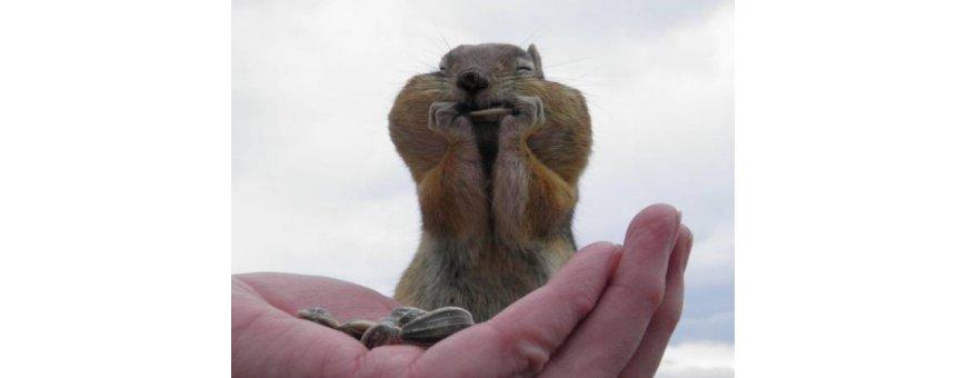 comida para hamster y ardillas