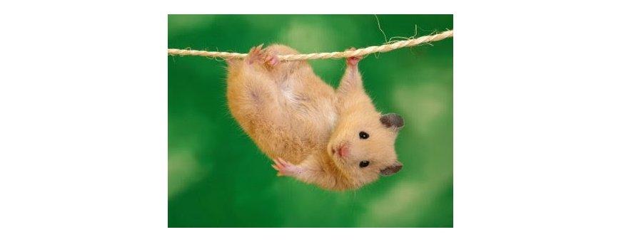 Vitaminas para roedores