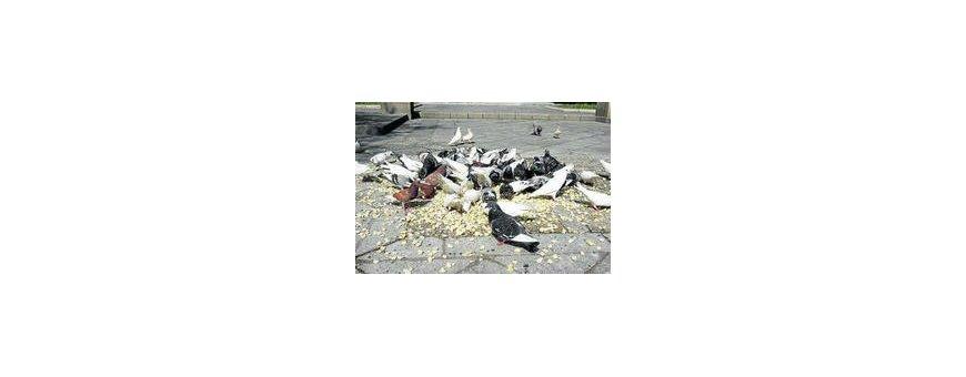 Comida palomas y perdices