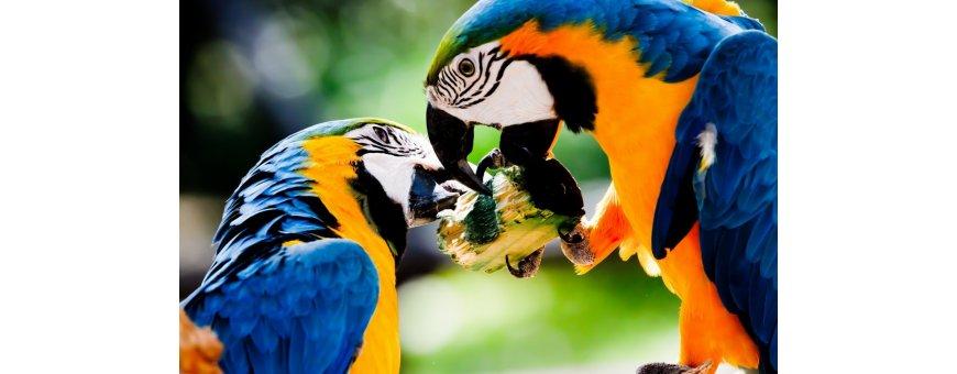 Comida para aves exóticas