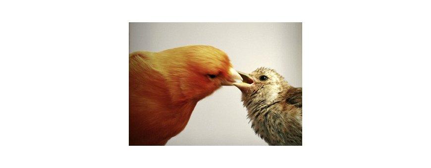 Especial crias pájaros