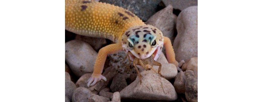 Comida para reptiles