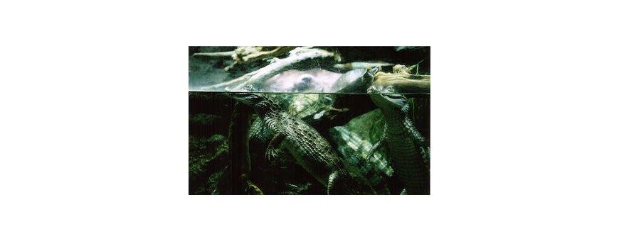 Acuarios reptiles