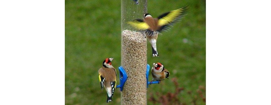 Comida aves autóctonas