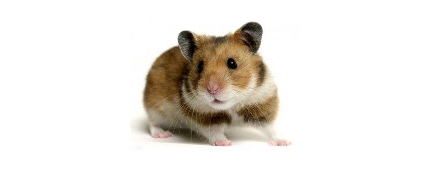 Ratones, Hamster y Jerbos