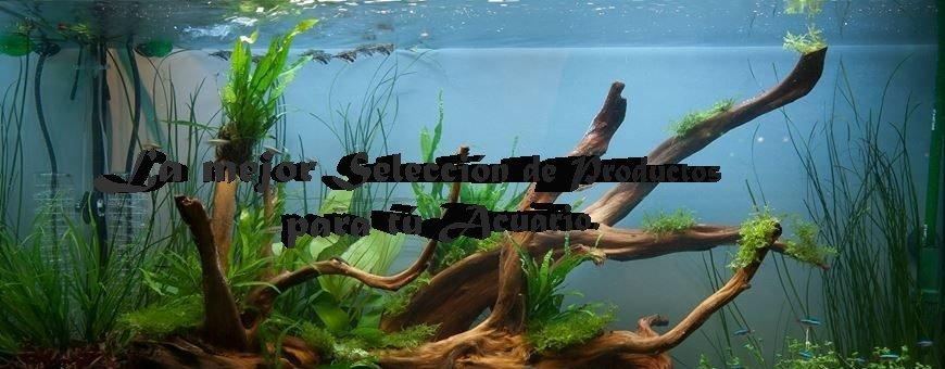Todos los elementos que necesites para mantener tu acuario a la perfección, en Aquarium Terramar te lo ofrecemos y siempre al mejor precio. Échale un vistazo a nuestras categorías Top en acuariofilia.