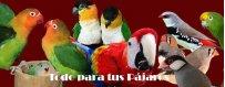 Tener un pajarillo que nos cante, un agaporni papillero, un loro, un canario, un jilguero o un periquito es muy común.
