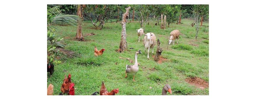 Alimentación y suplementos para animales de granja familiar