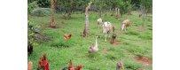 Alimentación y suplementos para animales de grana familiar
