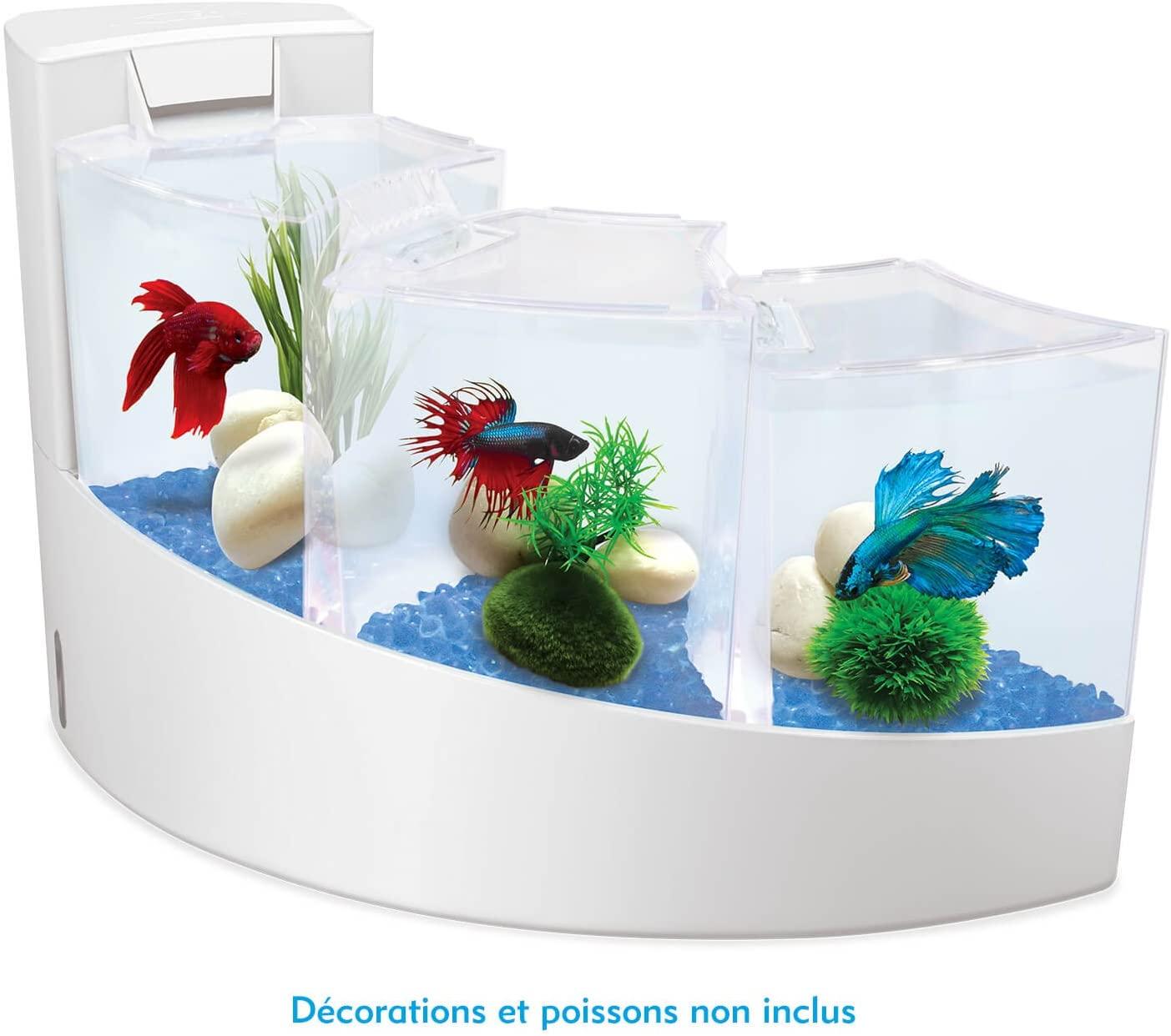 en el acuario para regalo aquafalls tripel, podemos meter varias especies de peces, además de pez betta.