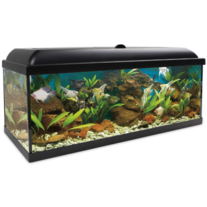 acuario completo al mejor precio, este acuario kit completo aqua led 240 litros contiene todos los elementos necesarios para llenarlo de agua y listo.