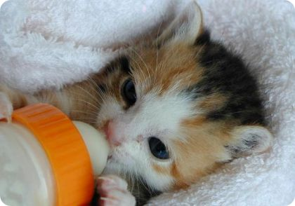 Pienso para gatos cachorros libra cat kitten 1 5kg - Cuidados gato 1 mes ...
