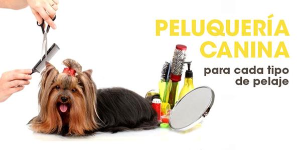 La peluquería canina en Priego de Córdoba está dentro de Nuestra tienda de mascotas Aquarium Terramar. El servicio que ofrecemos en nuestra tienda de mascotas y peluquería canina es el de arreglo de perros, corte a maquina de pelo y corte a máquina. En nuestra peluquería canina, pelamos todo tipo de perros, como yorkshire terrier, perros de agua, bichon maltes, caniche, asi  como perros de raza grandes como epastor aleman, labrador o golder retriever.