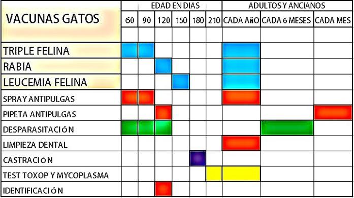 Vacunas Gatos Calendario.Calendario Vacunacion