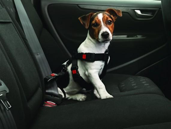 Resultado de imagen de fotos de perros en coche