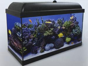 Acuario de agua salada, repelo de corales y peces.