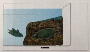Isla Rampa Flotante Para Tortugas Pequeña Repti Selva